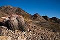 Ibex Wilderness - 49279697577.jpg