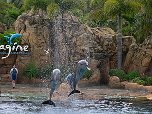 Sea World (Australia) - Imagine