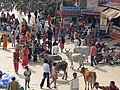 India - Haridwar - 001 - The bustle of pilgrims (2085701299).jpg