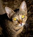 India Street Cat.jpg