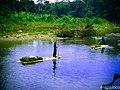 Indigenas Mayagnas, transportando bananas en balsas, en el rio Bambana. - panoramio.jpg