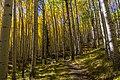 Inner Basin Trail No. 29 (29530959124).jpg