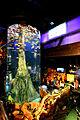 Inside Aquaria KLCC.jpg