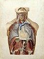J. Wittmaack-Planche anatomique peinte (1).jpg