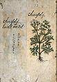 Japanese Herbal, 17th century Wellcome L0030060.jpg