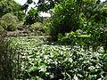 Jardín canario 13.JPG
