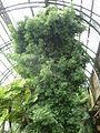 Jardin des plantes Paris Serre de l'histoire des plantes7.JPG