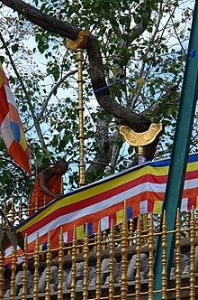 Jaya Sri Maha Bodhi - Wikipedia