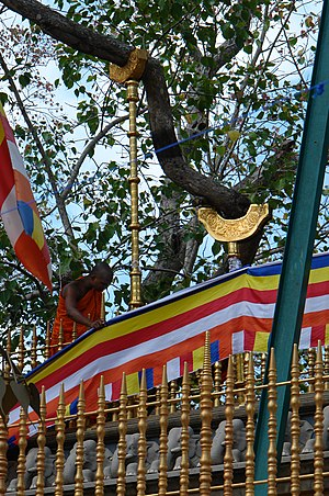 Jaya Sri Maha Bodhi - A Photo taken from the Lower Compound, Pahatha Maluwa.