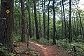Jones Creek Dam Trail (223E) at Winding Stair Gap Rd (FS 77) - panoramio.jpg