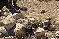 Jordan (8695097789).jpg