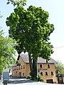 Julbach Linde 1.jpg