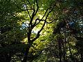 Kasugayama Primeval Forest 01.jpg