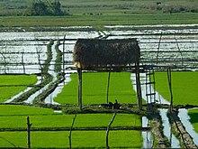 Kaziranga National Park 100 (310).jpg