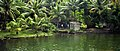 Kerala backwaters scene (6275188438).jpg