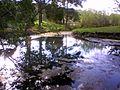 Kimberley warm springs.jpg