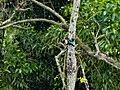 Kingfisher at Altadighi.jpg
