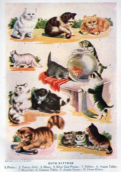 File:Kittens.jpg