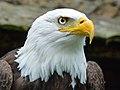 L'oeil de l'aigle (Unsplash).jpg