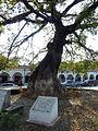 La Pochota, Chiapa de Corzo (8264684132).jpg