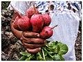 La vida en Yucatán - Ek Balam 2015 06.jpg