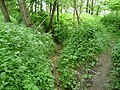Landschaftsschutzgebiet Horstmanns Holz Melle -Waldende mit Bach- Datei 1.jpg