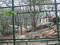 Leopards at Bannerghatta National Park 4-24-2011 1-15-10 PM.JPG