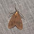 Lepidoptera (16037175455).jpg