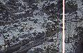 Lichen holding eroding sand. North Head (24005118387).jpg