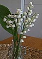 Lily of the Valley (27258925637).jpg