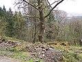 Loch Eck, Benmore-Glenbranter Forestry Road - geograph.org.uk - 159906.jpg