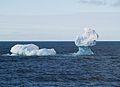 Loch Ness Iceberg, Antarctica.jpg