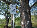 Lodzki Szlak Konny na Luku Zaleczanskim.jpg