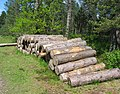 Log stack, Tentsmuir. - geograph.org.uk - 13497.jpg