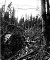Logging in gulch with cable lines, Index Galena Co, ca 1925 (PICKETT 330).jpg