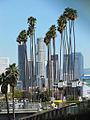 Los Angeles Washingtonia Robusta.jpg