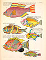 Louis Renard colorful fish.jpg