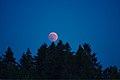 Lunar Eclipse 2018 SG 012 (28804399147).jpg