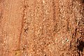 Lyons Sandstone (Permian; Garden of the Gods, Colorado Springs, Colorado, USA) 18 (49173741303).jpg