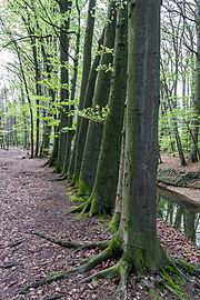 Münster, Wolbeck, Wolbecker Tiergarten, Angel -- 2014 -- 7134.jpg