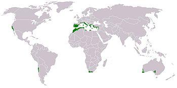 La macchia mediterranea occupa appena il 2% della superficie delle terre emerse del pianeta.