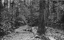 An unpaved path leads to a bridge in a second-growth forest with a thick understory of shrubs.