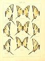Macrolepidoptera15seit 0039.jpg