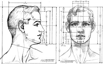 Body proportions - Image: Male Head proportions