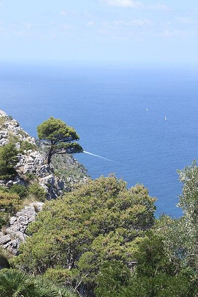 File:Mallorca - panoramio (8).jpg