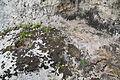 Malta - St. Paul's Bay - Xemxija Heritage Trail - Roman Baths 03 ies.jpg