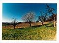 March Spring - Master Seasons Rhine Valley Photography 1990 - panoramio.jpg