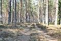 Meža ceļš Garkalnes novadā, Garkalnes pagasts, Garkalnes novads, Latvia - panoramio.jpg