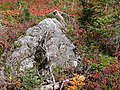 Mid September 2015. Nisqually Vista trail. (c87fdb44a9024db99999dc6181c72a31).JPG