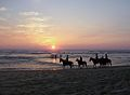 Mimizan chevaux Plage Nord.jpg